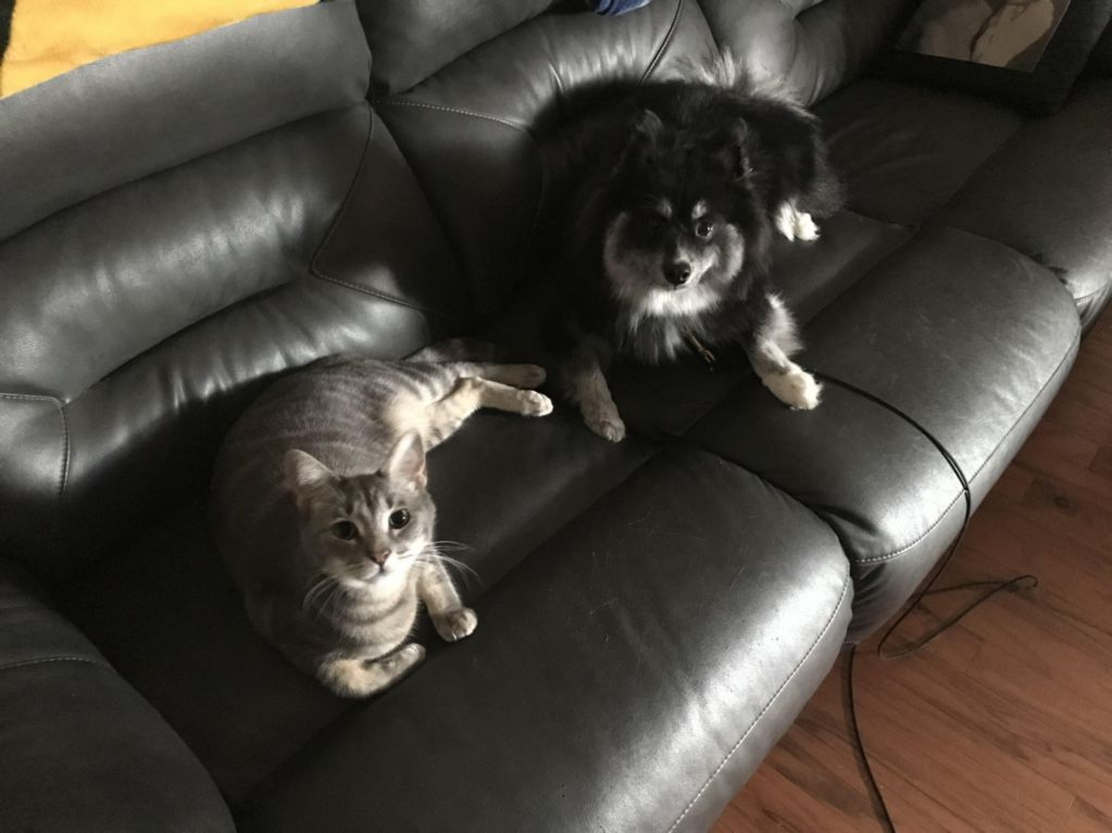 dog and a cat on a leather couch